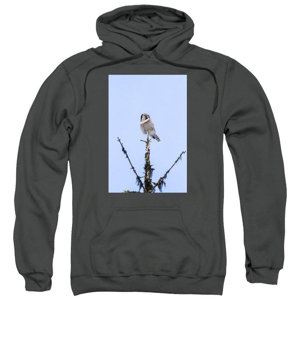 Hawk Sweatshirt featuring the photograph Hawk Owl by Borje Olsson