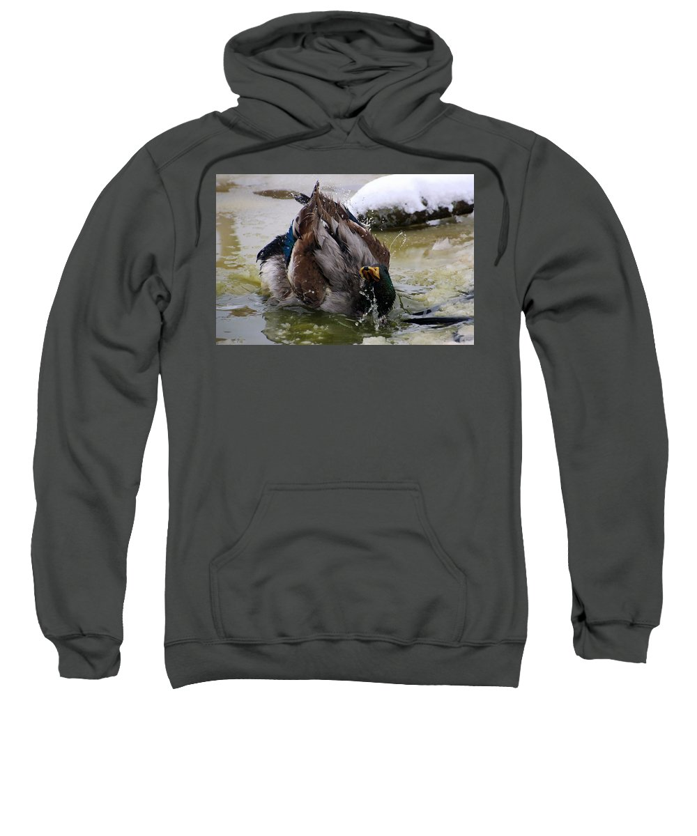 Ducks Sweatshirt featuring the photograph Mallard Duck by FL collection