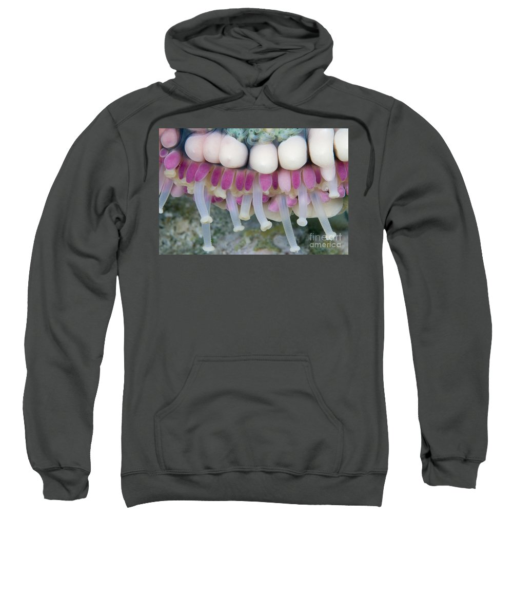 Animal Art Sweatshirt featuring the photograph Indonesia, Marine Life by Dave Fleetham - Printscapes