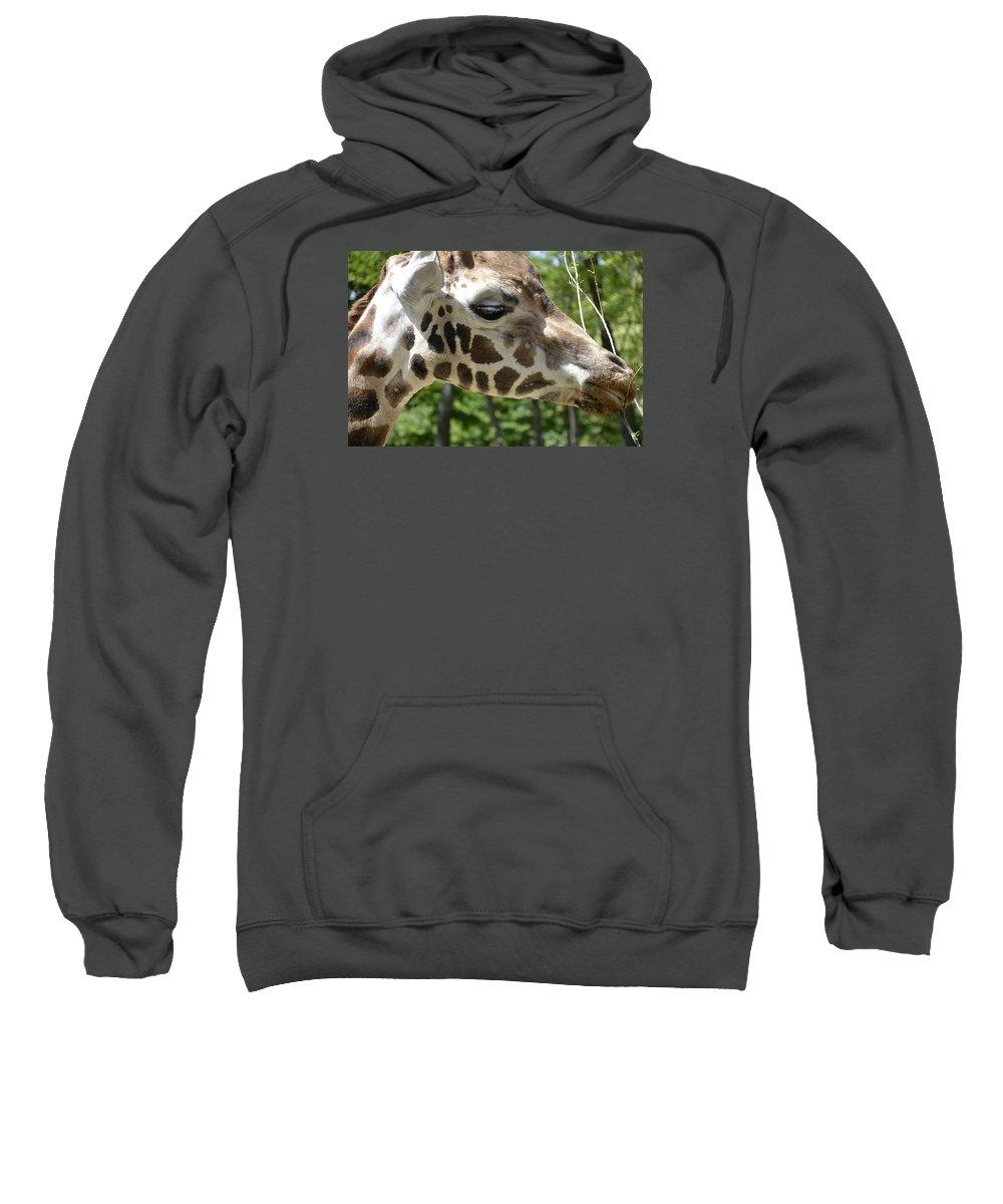 Mammal Sweatshirt featuring the photograph Giraffe by FL collection