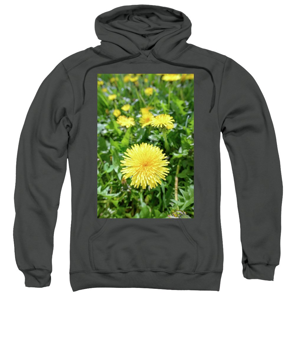 Taraxacum Officinale Sweatshirt featuring the photograph Yellow Dandelion Flowers by Alain De Maximy