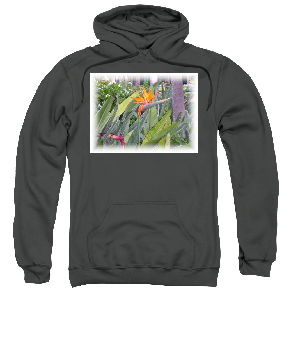 Plant Sweatshirt featuring the photograph A Bird In Paradise by Maria Bonnier-Perez