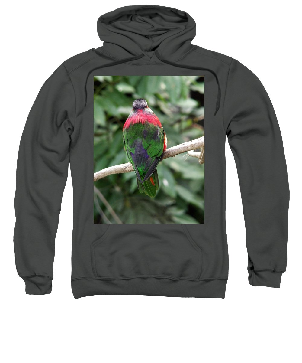 Bird Sweatshirt featuring the photograph A Bird's Perspective by Amy Fose