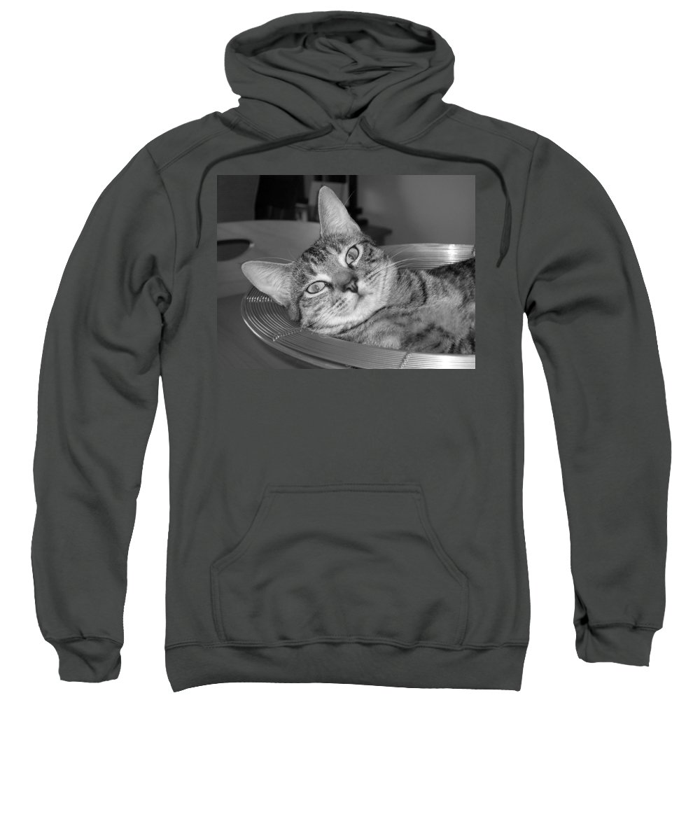 Cat Sweatshirt featuring the photograph A Bowl Of Ginger by Maria Bonnier-Perez