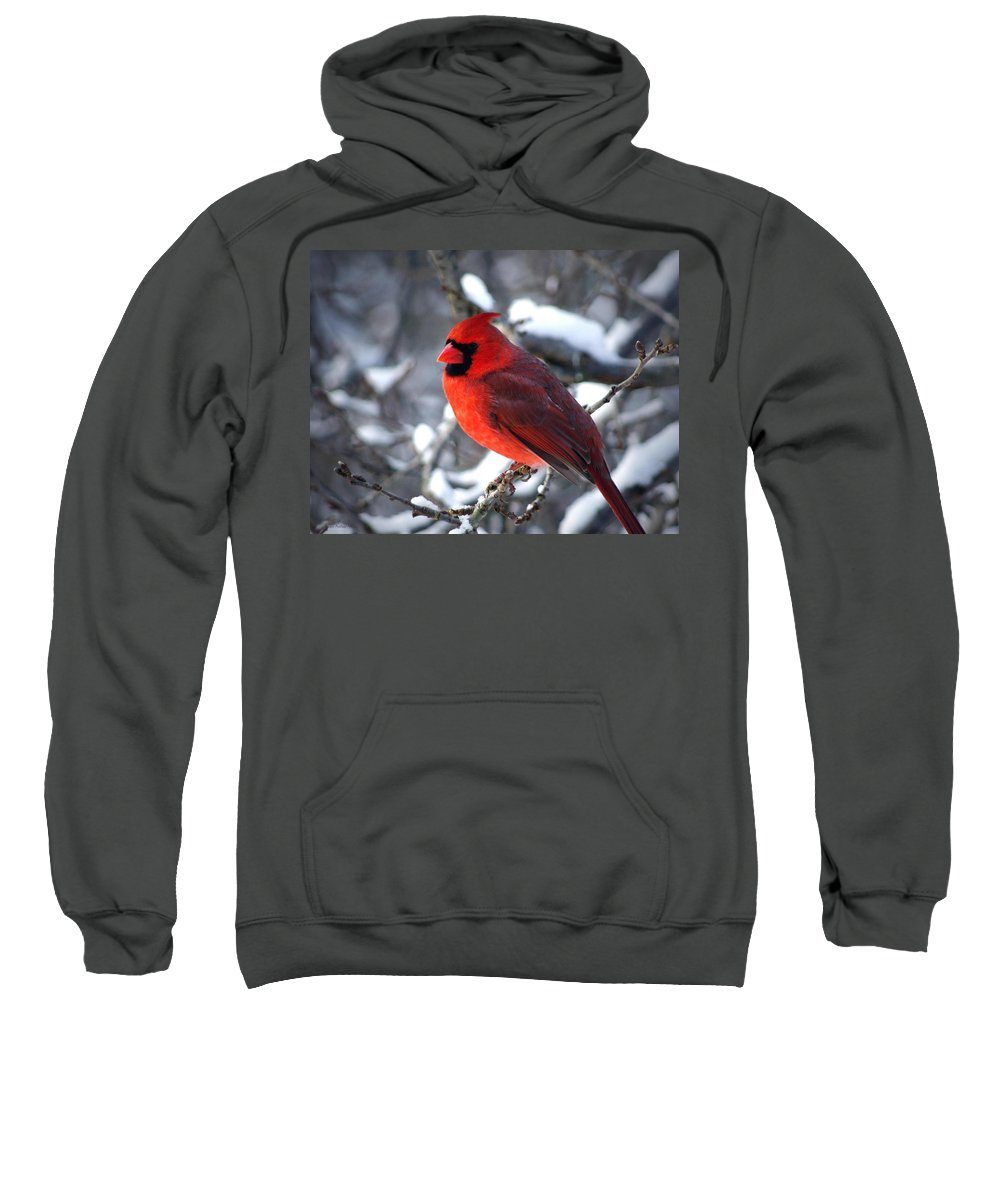 Birds Sweatshirt featuring the photograph A Cardinal Day... by Arthur Miller