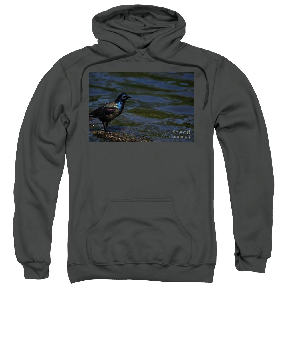 Bird Sweatshirt featuring the photograph A Common Grackle by Karol Livote