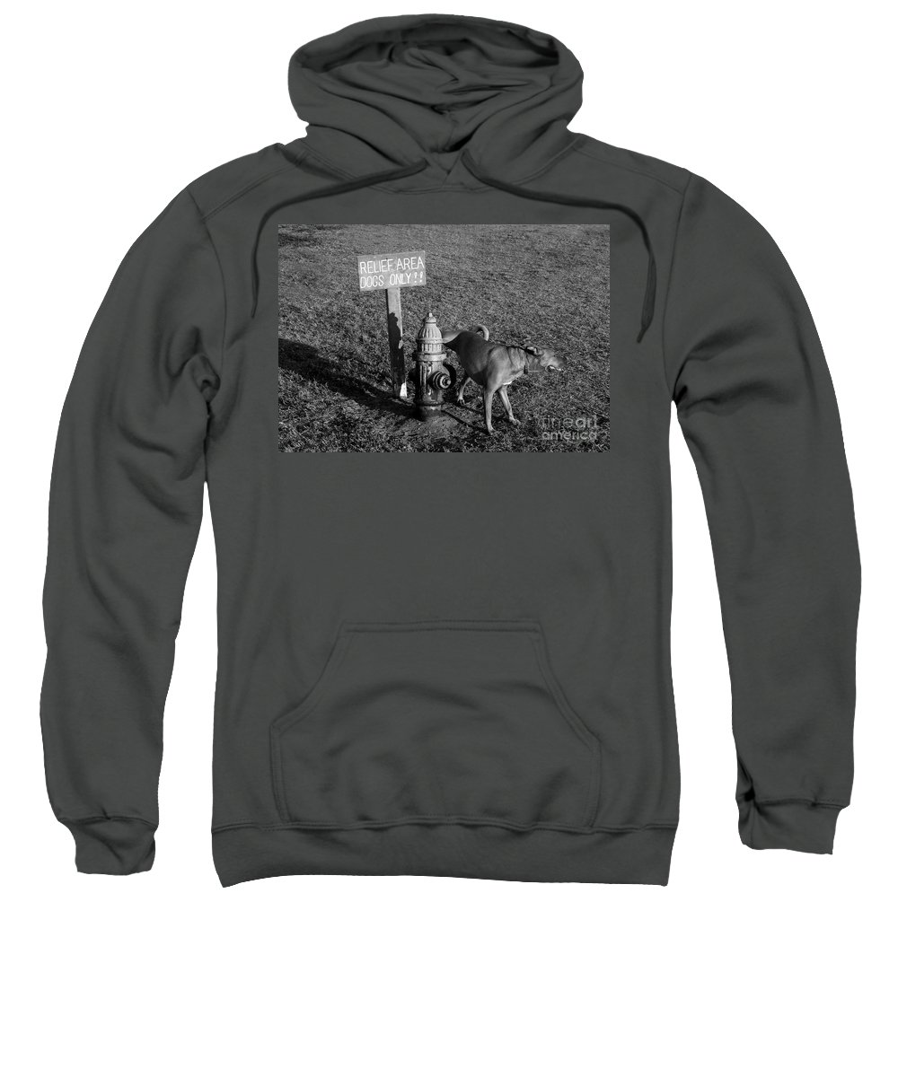 Dog Sweatshirt featuring the photograph A Dog's Life by David Lee Thompson