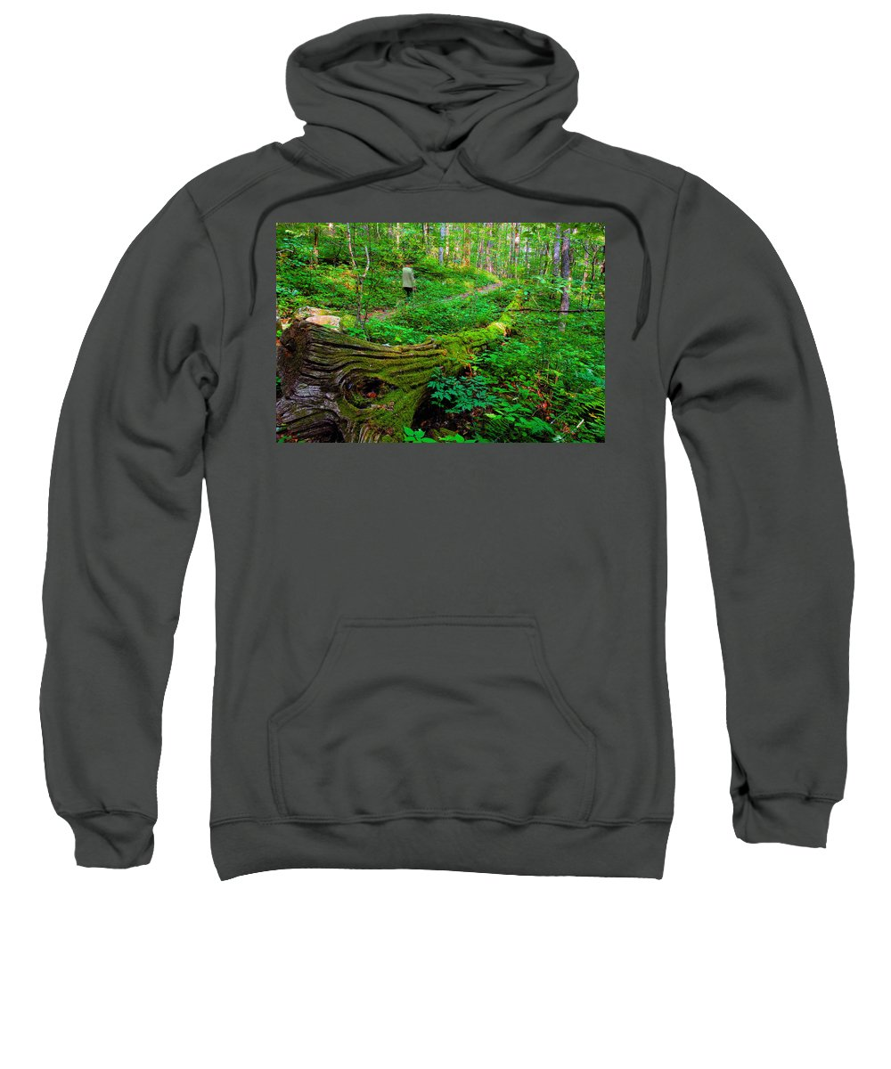 Hiking Sweatshirt featuring the painting A Forest Stroll by David Lee Thompson