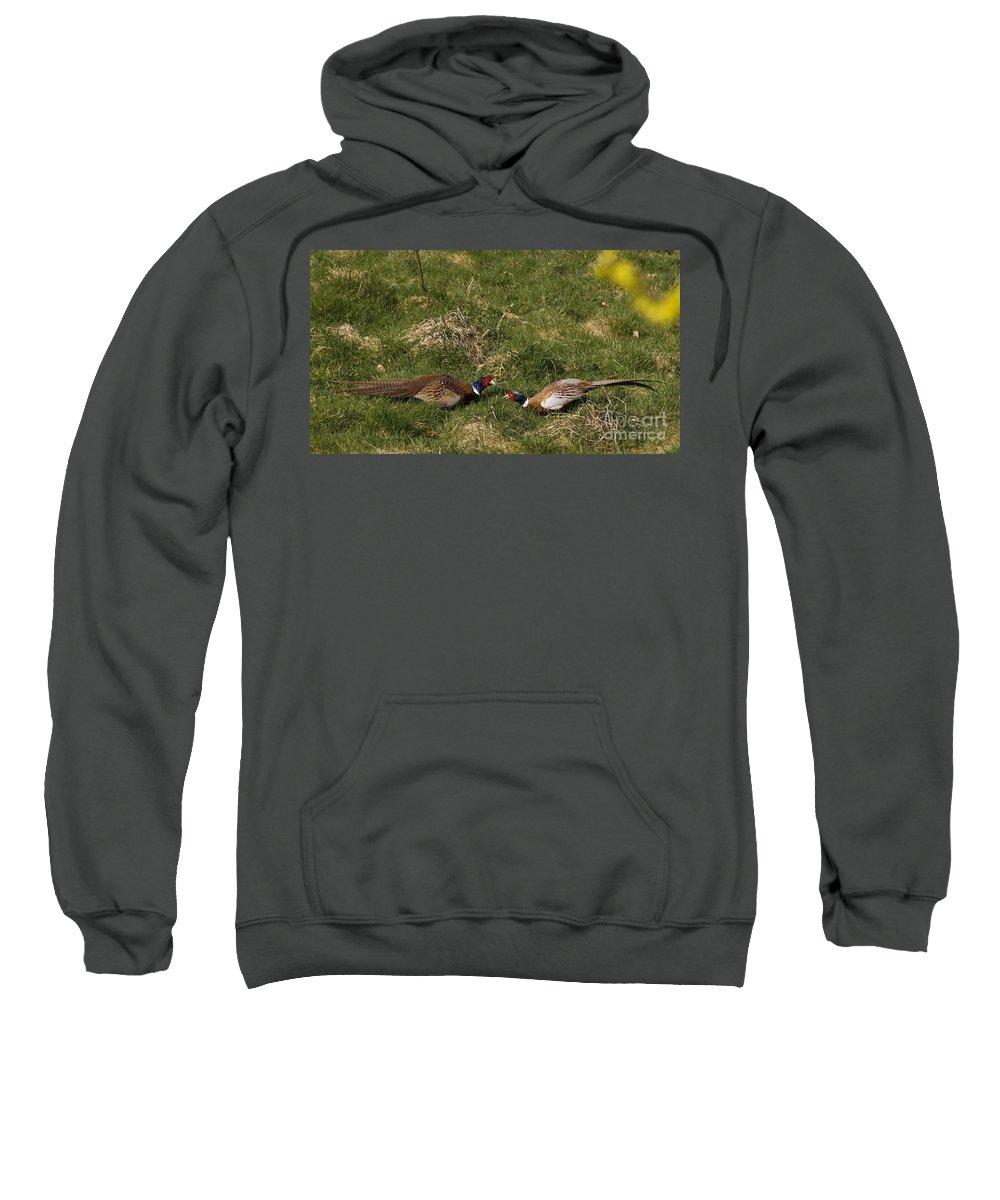 Pheasant Sweatshirt featuring the photograph A Little Argue by Angel Ciesniarska