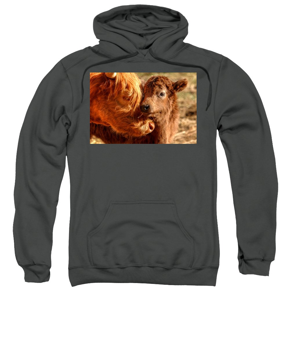 Cattle Sweatshirt featuring the photograph A Mother's Love 0088 by Kristina Rinell