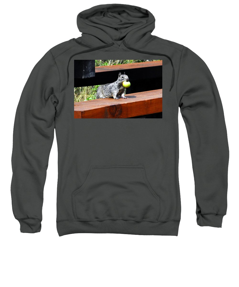 Squirrel Sweatshirt featuring the photograph A Mouthful by David Lee Thompson