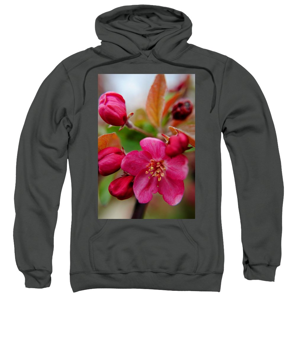 Opening Sweatshirt featuring the photograph A New Day by Frozen in Time Fine Art Photography