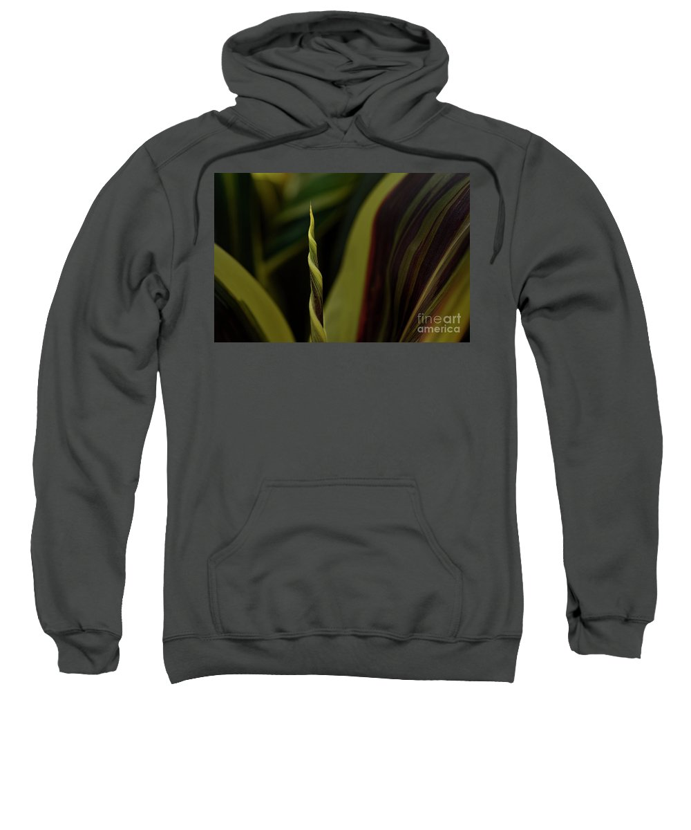 Canna Sweatshirt featuring the photograph A New Leaf Is Born by Mike Nellums