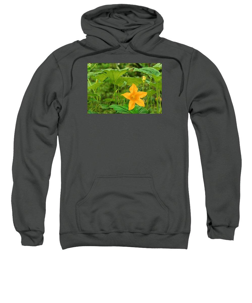 Pumpkin Flower Sweatshirt featuring the photograph A Pumpkin Shall Be Born by Bijan Pirnia