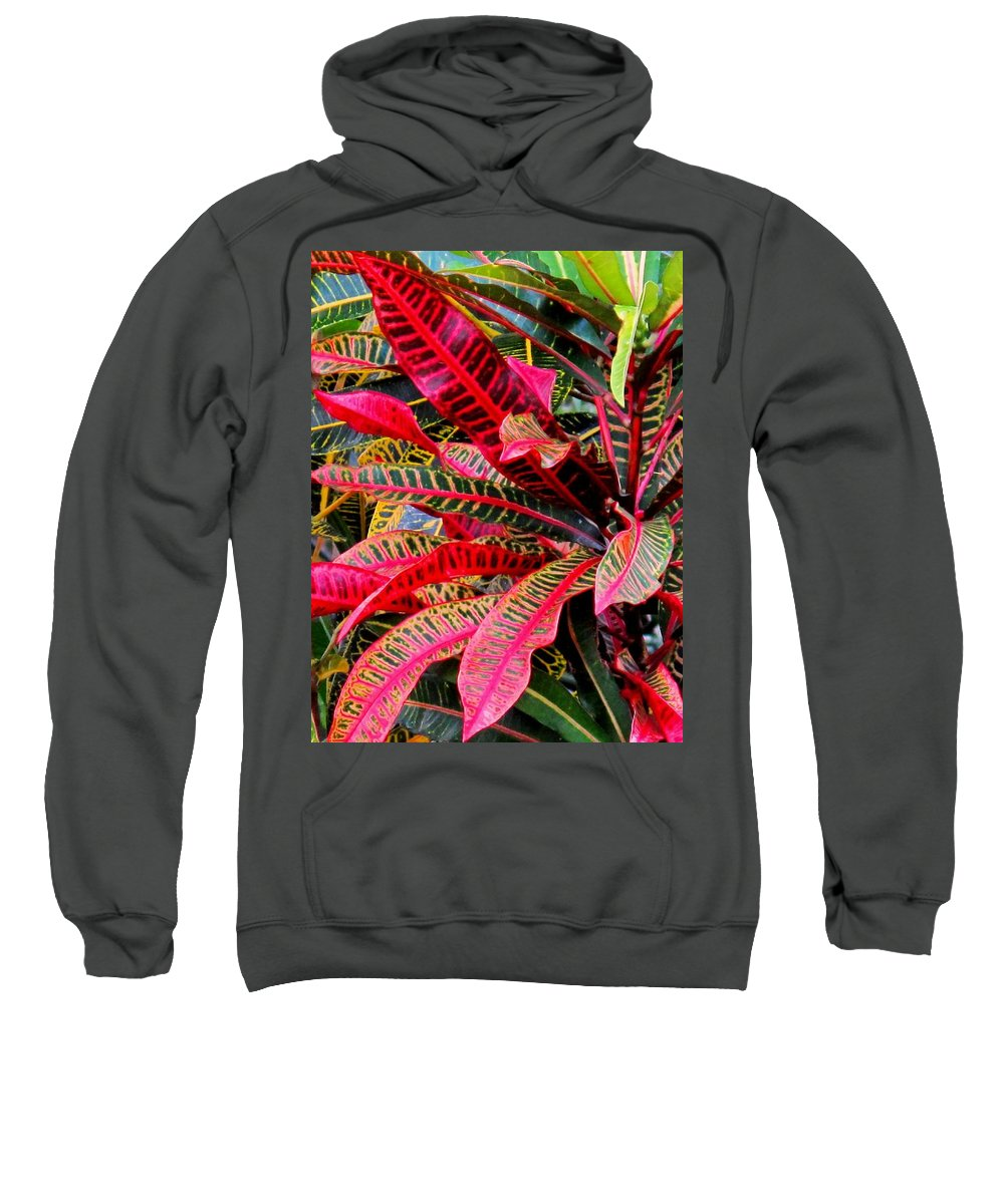 Red Sweatshirt featuring the photograph A Rich Composition by Ian MacDonald