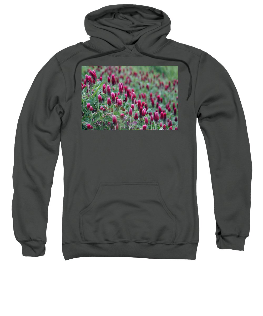 Flowers Sweatshirt featuring the photograph A Riot Of Red Clover by Carolyn Fletcher