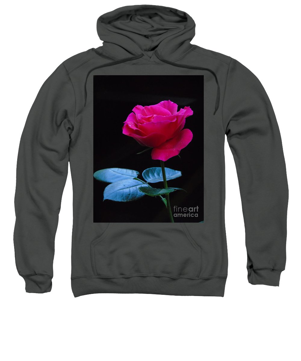 Rose Sweatshirt featuring the photograph A Very Special Rose by Silvana Miroslava Albano