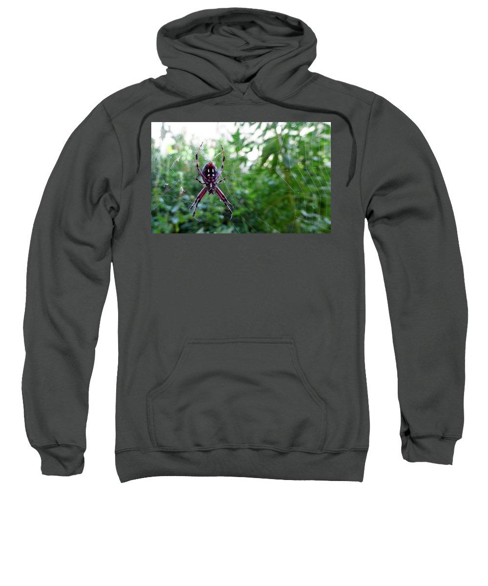 Palps Photographs Hooded Sweatshirts T-Shirts