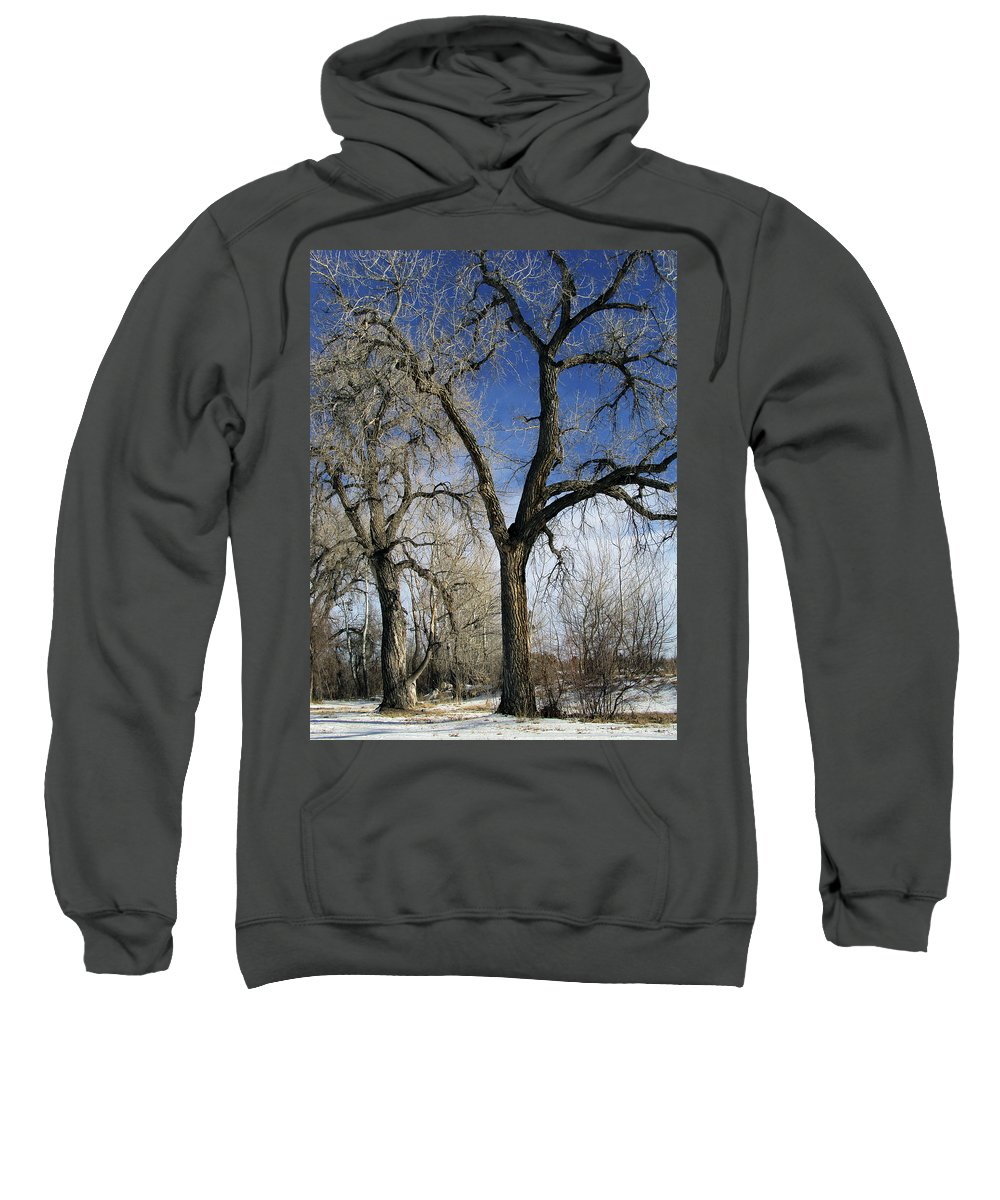 Tree Sweatshirt featuring the photograph A Winter Kiss by Angelina Vick