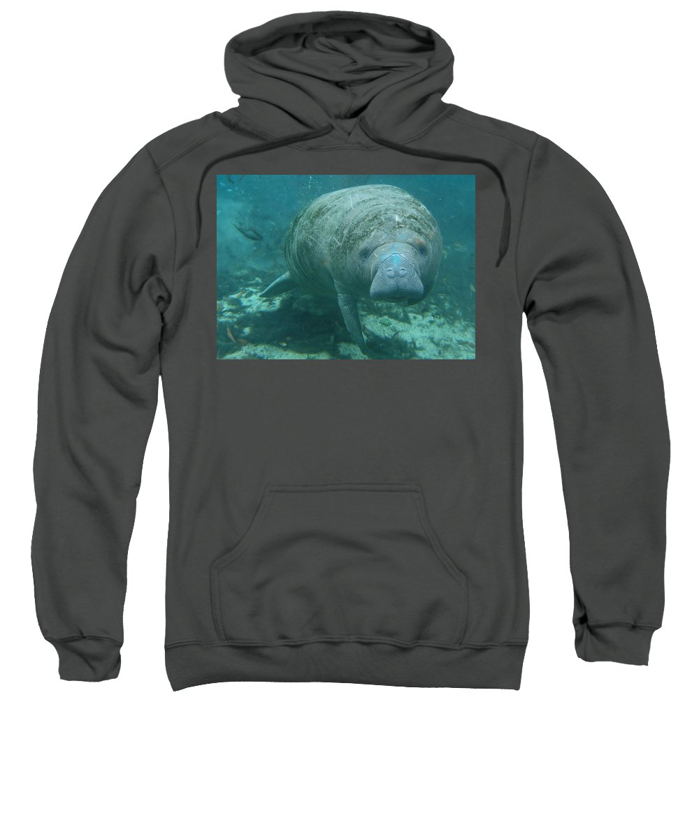 Joy Sweatshirt featuring the photograph About To Meet A Manatee by Kimberly Mohlenhoff