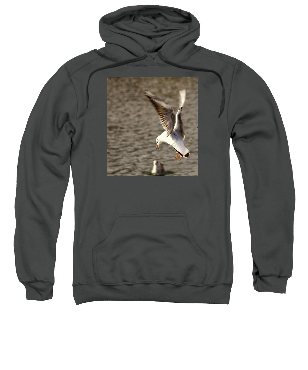 Seagull Sweatshirt featuring the photograph About To Swoop by Chris Wharmby