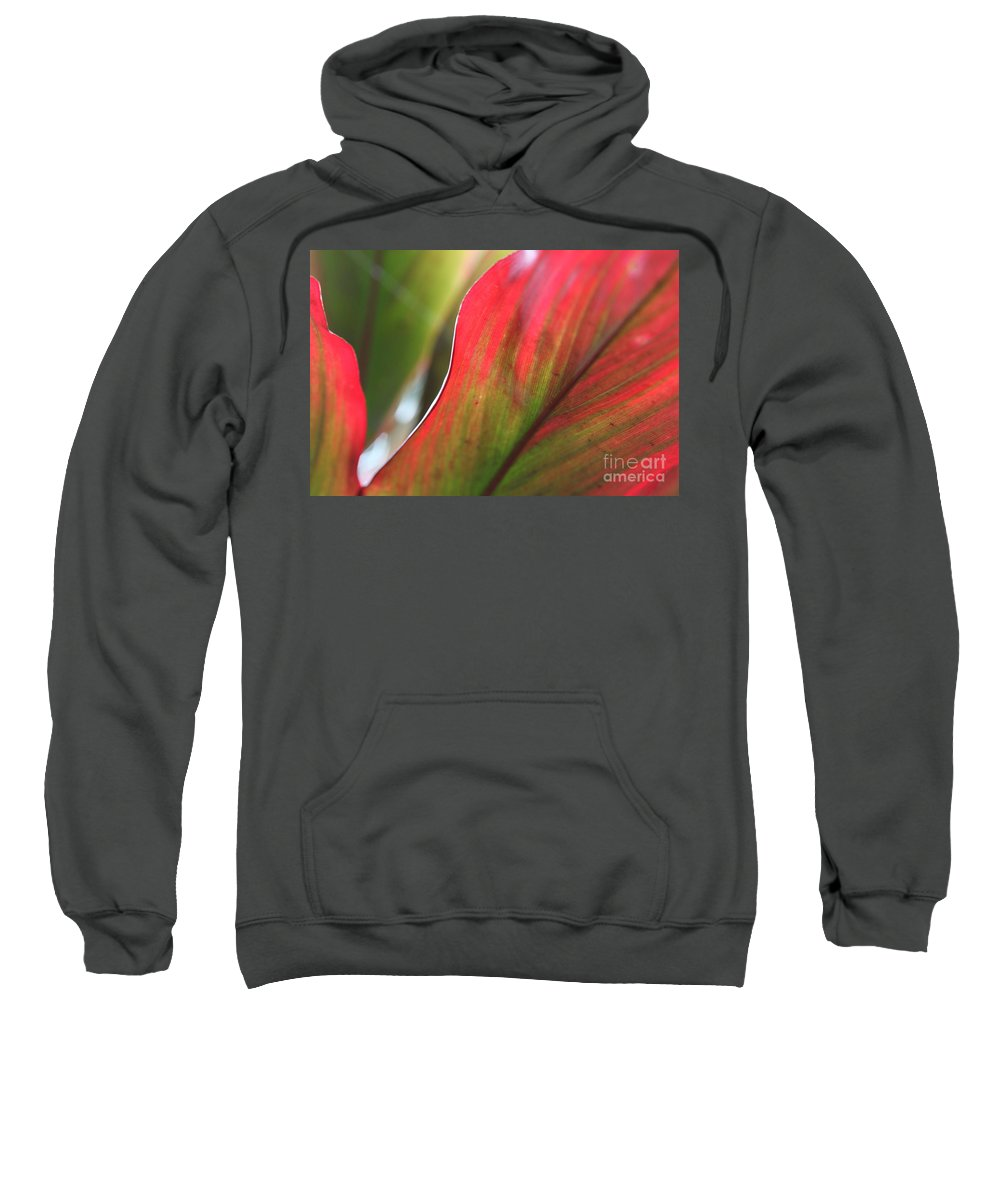Pink Sweatshirt featuring the photograph Abstract Leaves by Nadine Rippelmeyer