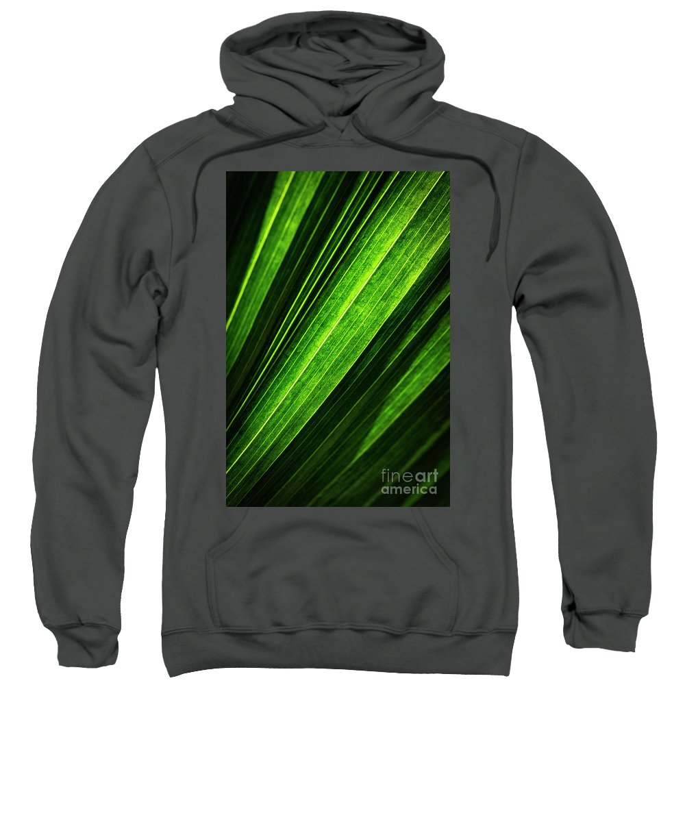 Beauty Sweatshirt featuring the photograph Abstract Of Green Leaf Of Exotic Palm Tree by Jozef Jankola