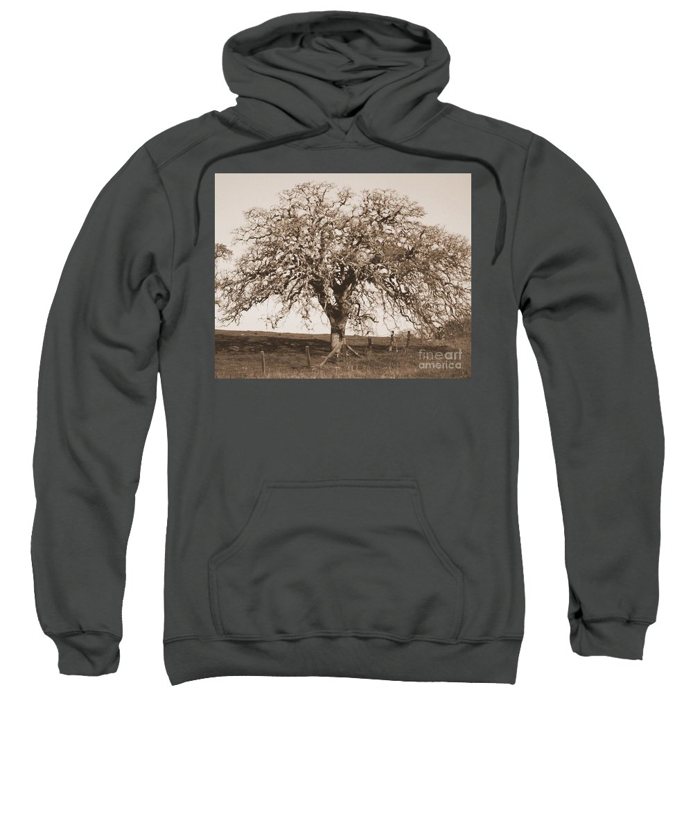 Tree Sweatshirt featuring the photograph Acacia Tree In Sepia by Carol Groenen