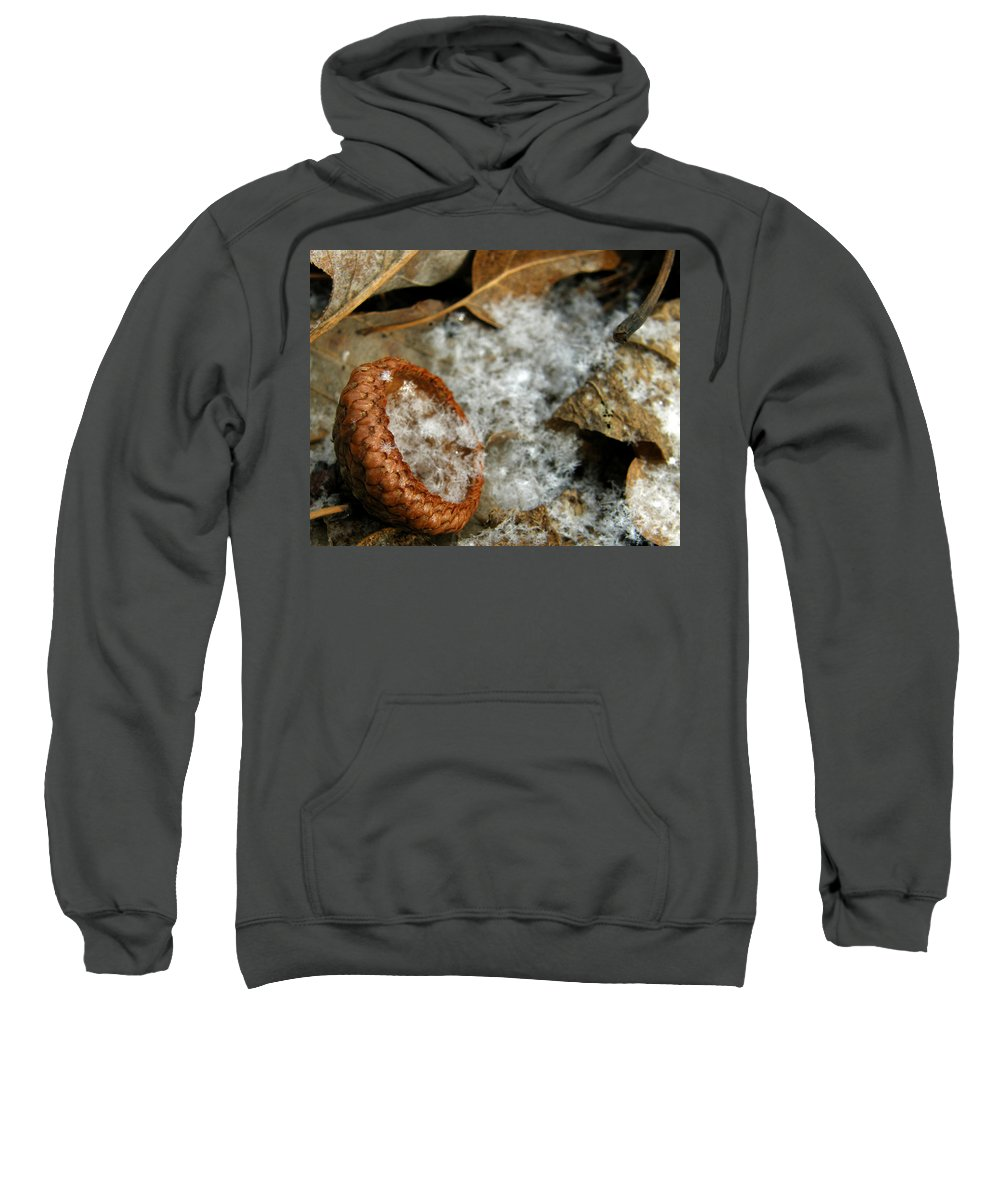 Acorn Sweatshirt featuring the photograph Acorn Cap Filled With Snow by Kimberly Mohlenhoff