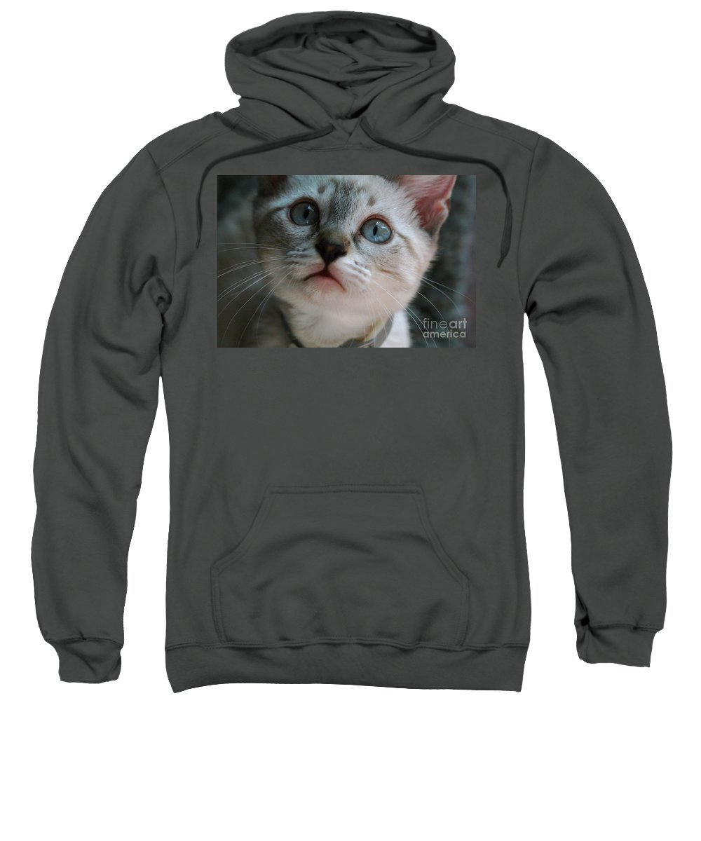 Cats Sweatshirt featuring the photograph Adorable Kitty by Kim Henderson