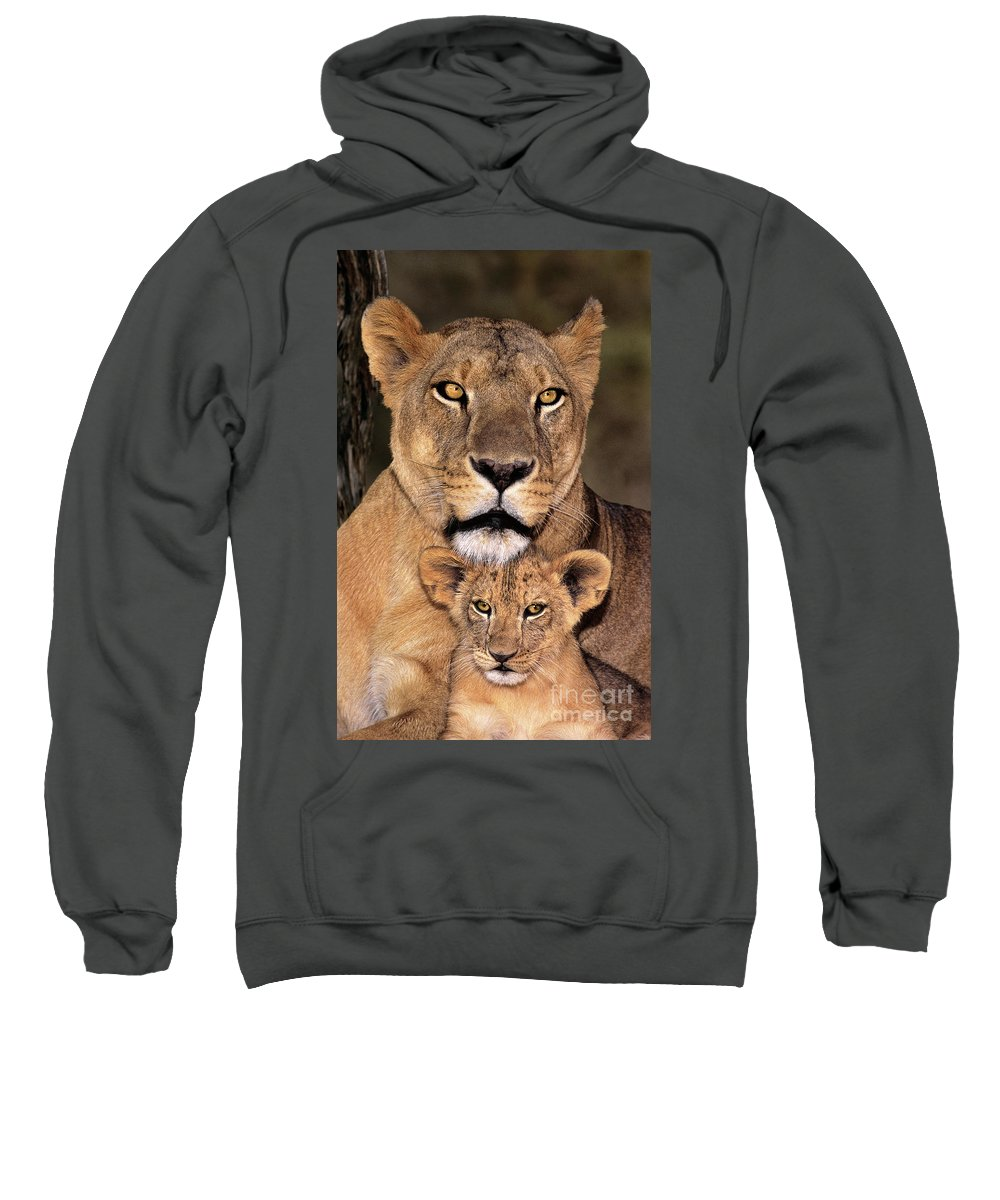 African Lion Sweatshirt featuring the photograph African Lions Parenthood Wildlife Rescue by Dave Welling