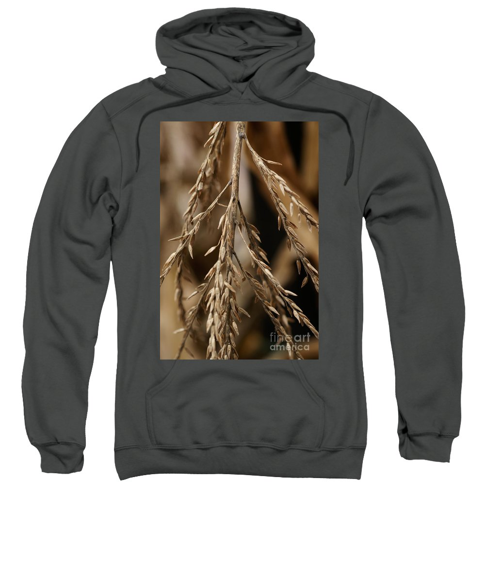 Corn Sweatshirt featuring the photograph After The Harvest - 1 by Linda Shafer