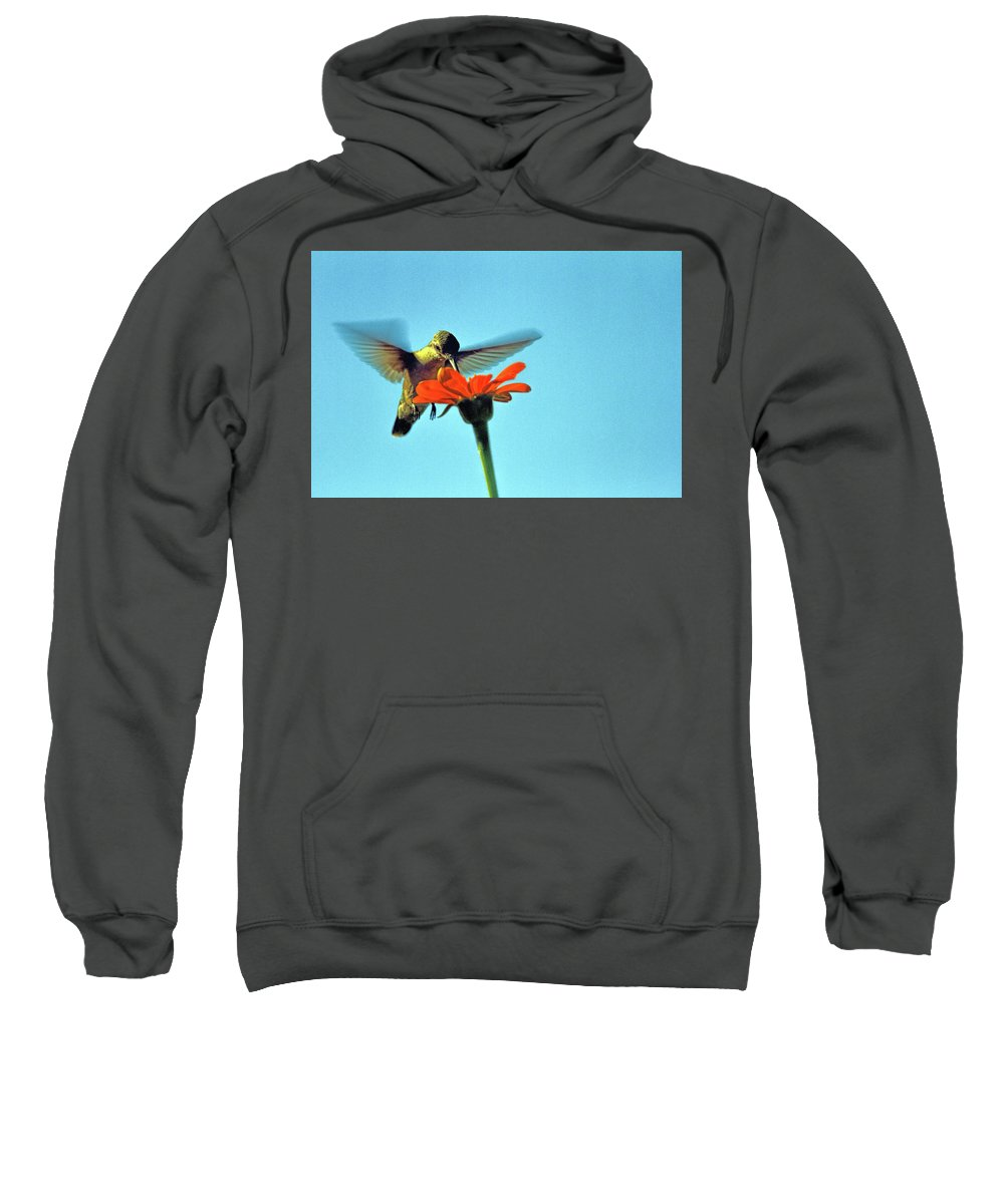 Recent Sweatshirt featuring the photograph Afternoon Snack by Geraldine Scull
