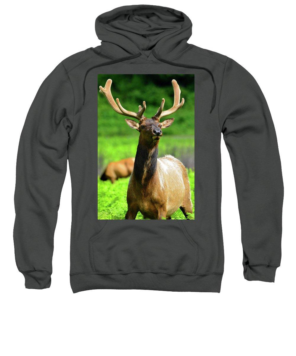 Elk Sweatshirt featuring the photograph Alert by Surjanto Suradji