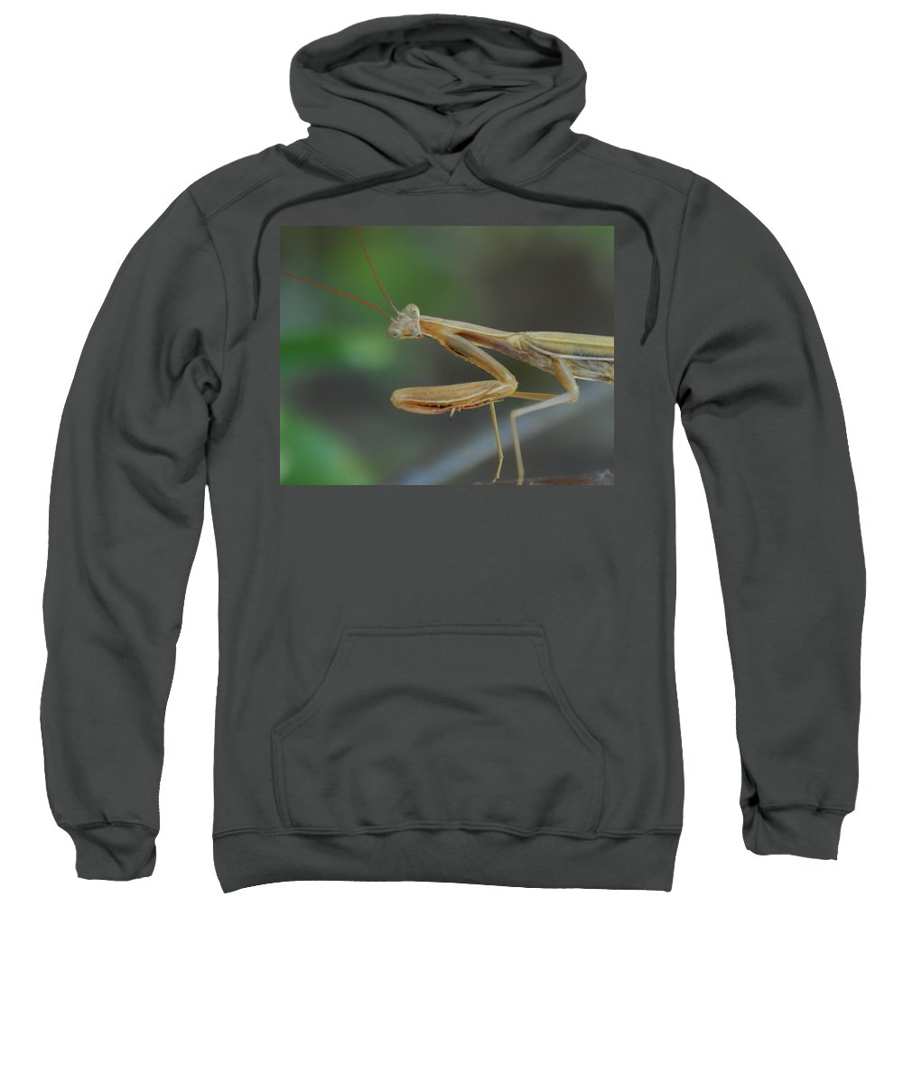 Praying Mantis Sweatshirt featuring the photograph Aliens Among Us by Donna Blackhall