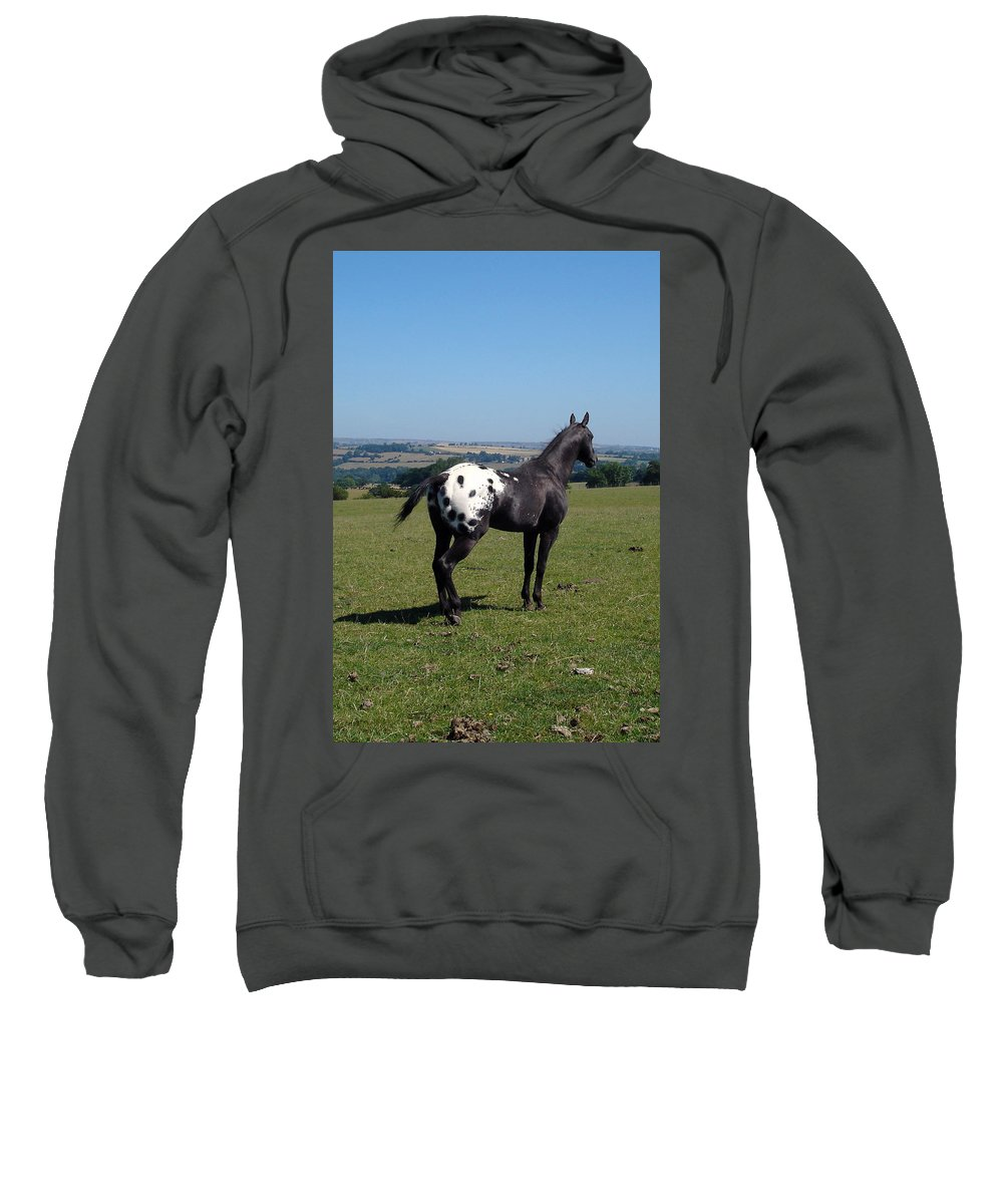 Horses Sweatshirt featuring the photograph All He Surveys by Susan Baker