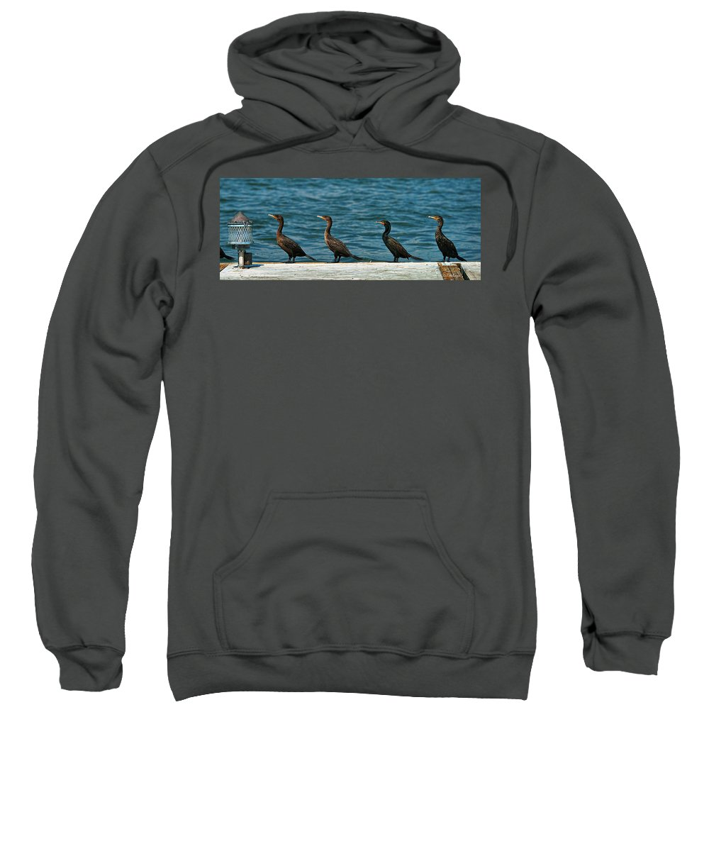 Cormorant Sweatshirt featuring the photograph All In A Row by Christopher Holmes
