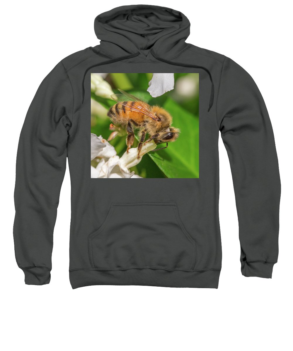 Honey Bee Sweatshirt featuring the photograph All In, Apis Mellifera by Christy Cox