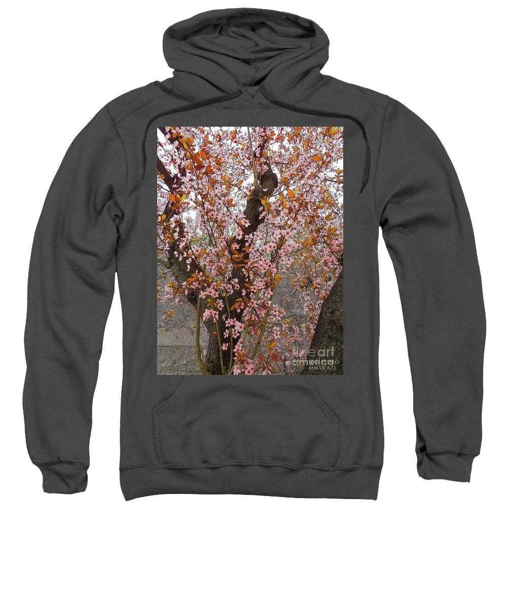 Almonds Sweatshirt featuring the photograph Almond Tree Flowers 05 by Don Pedro DE GRACIA