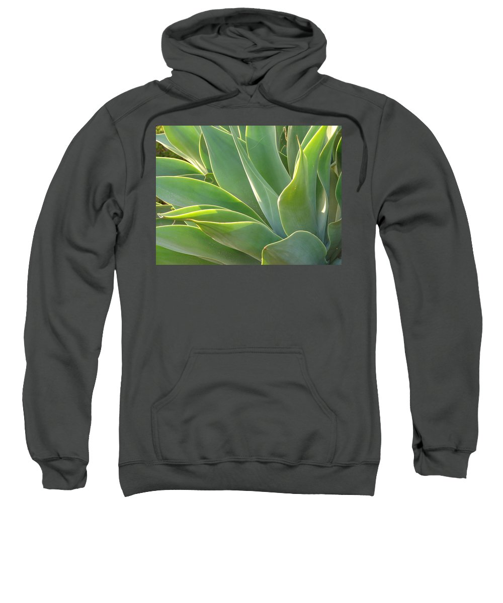 Abstract Art Sweatshirt featuring the photograph Aloe by Lois Boyce