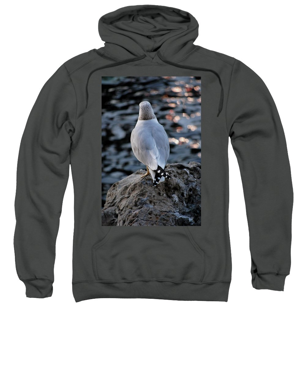 Seagull Sweatshirt featuring the photograph Alone by Robert Meanor