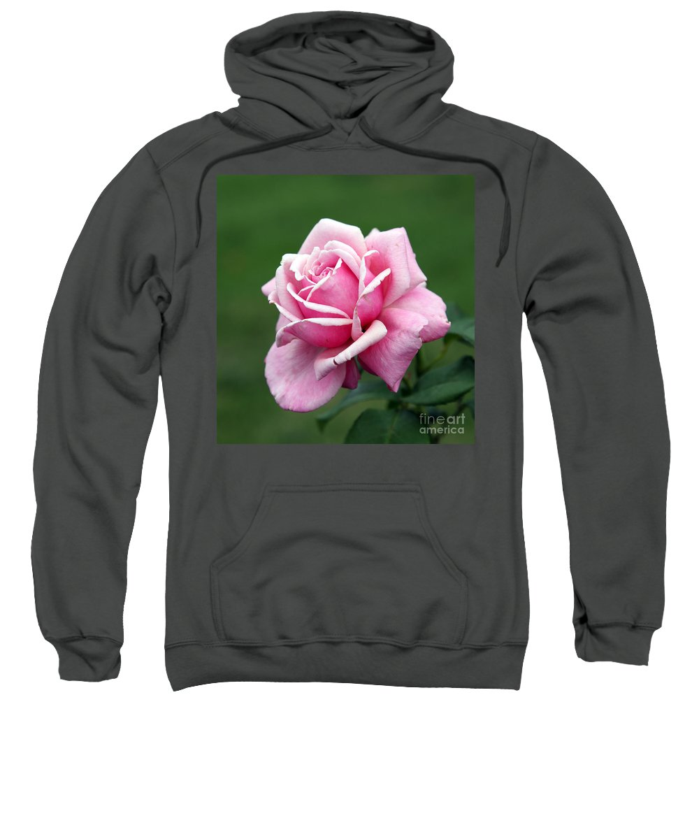 Rose Sweatshirt featuring the photograph Alone Time by Amanda Barcon