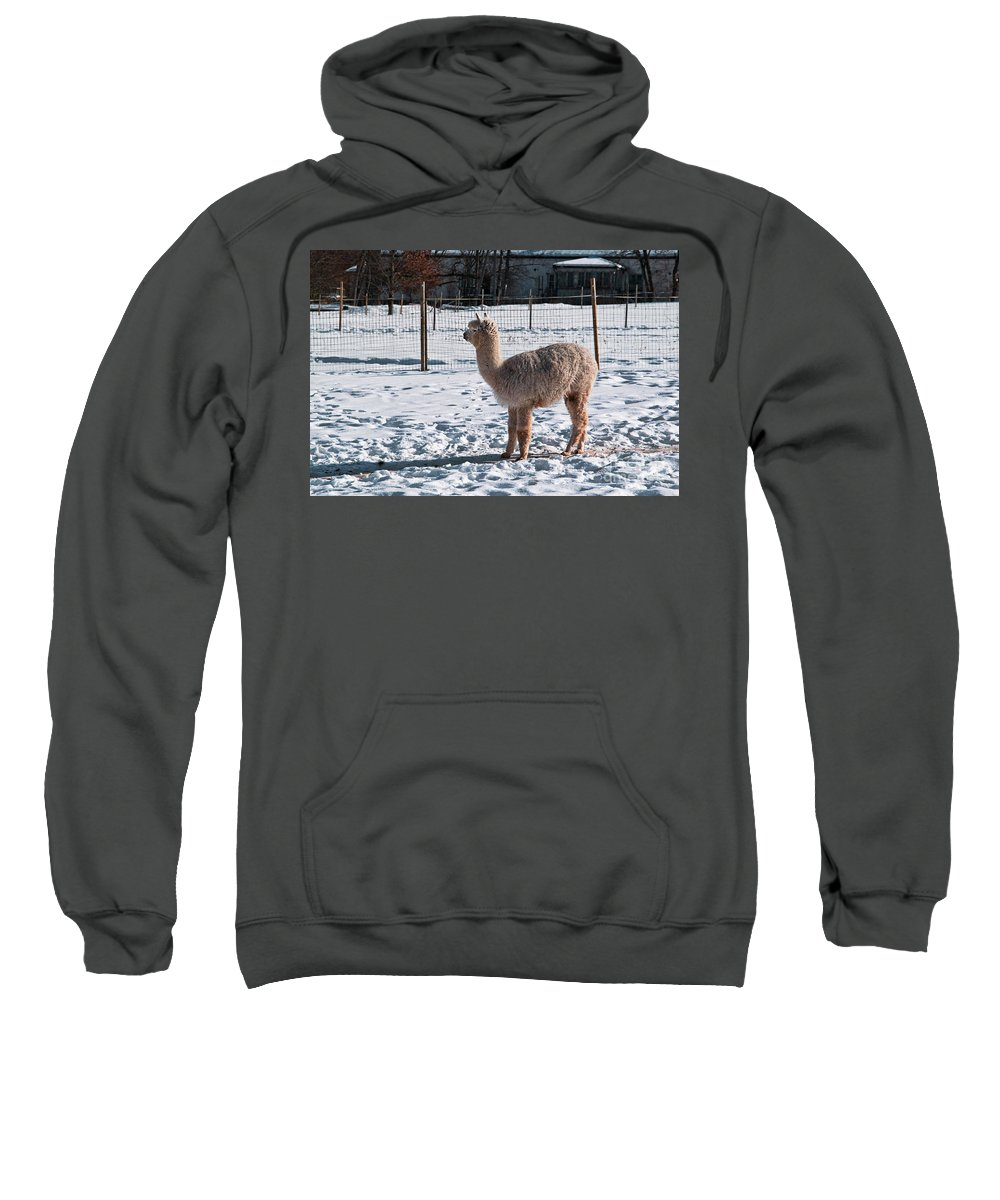 Wool Production Sweatshirt featuring the photograph Alpaca 10 by Esko Lindell