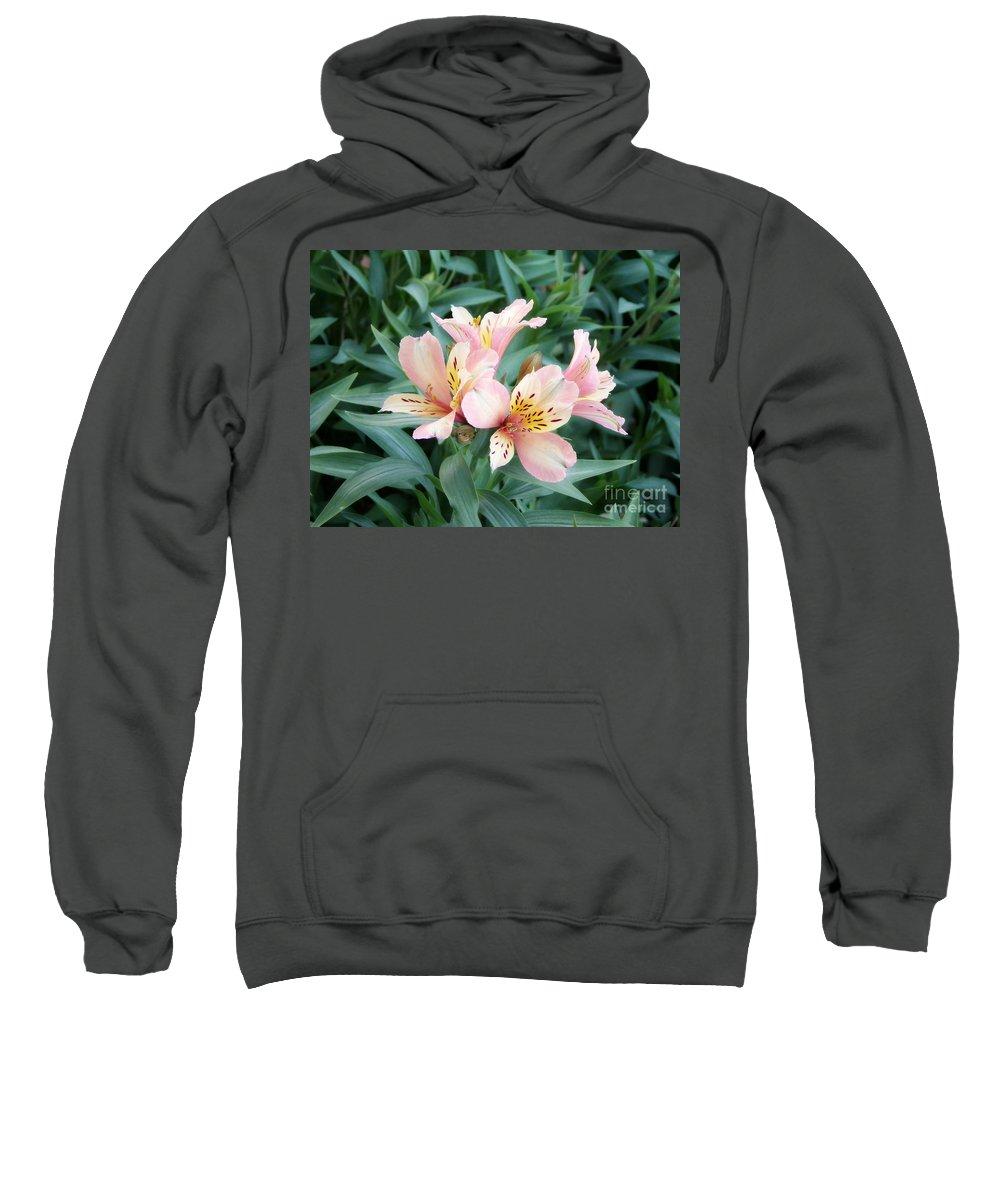 Alstroemeria Sweatshirt featuring the photograph Astroemeria by Elizabeth Duggan
