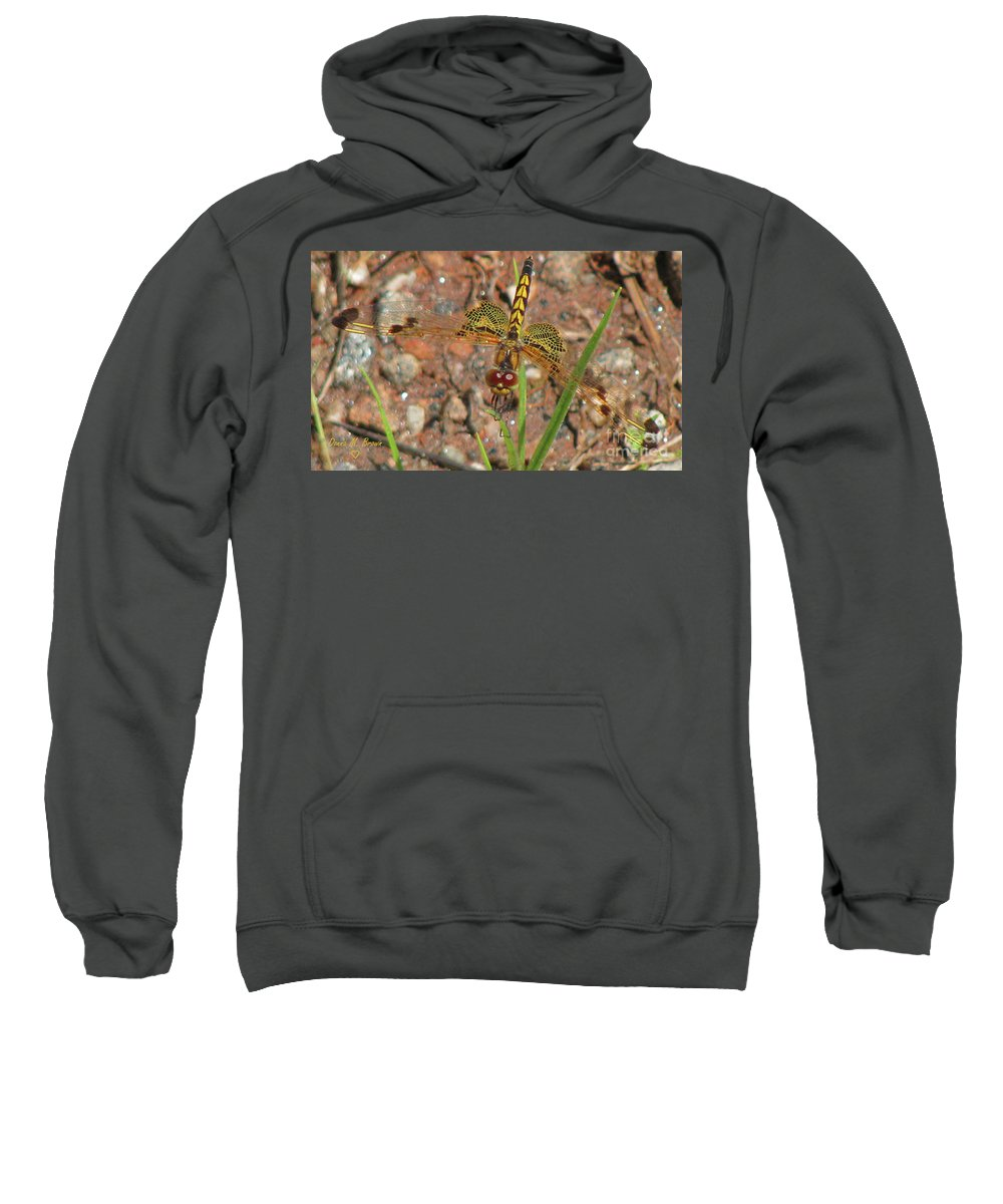 Dragonfly Sweatshirt featuring the photograph Amanda's Pennant Dragonfly Female by Donna Brown