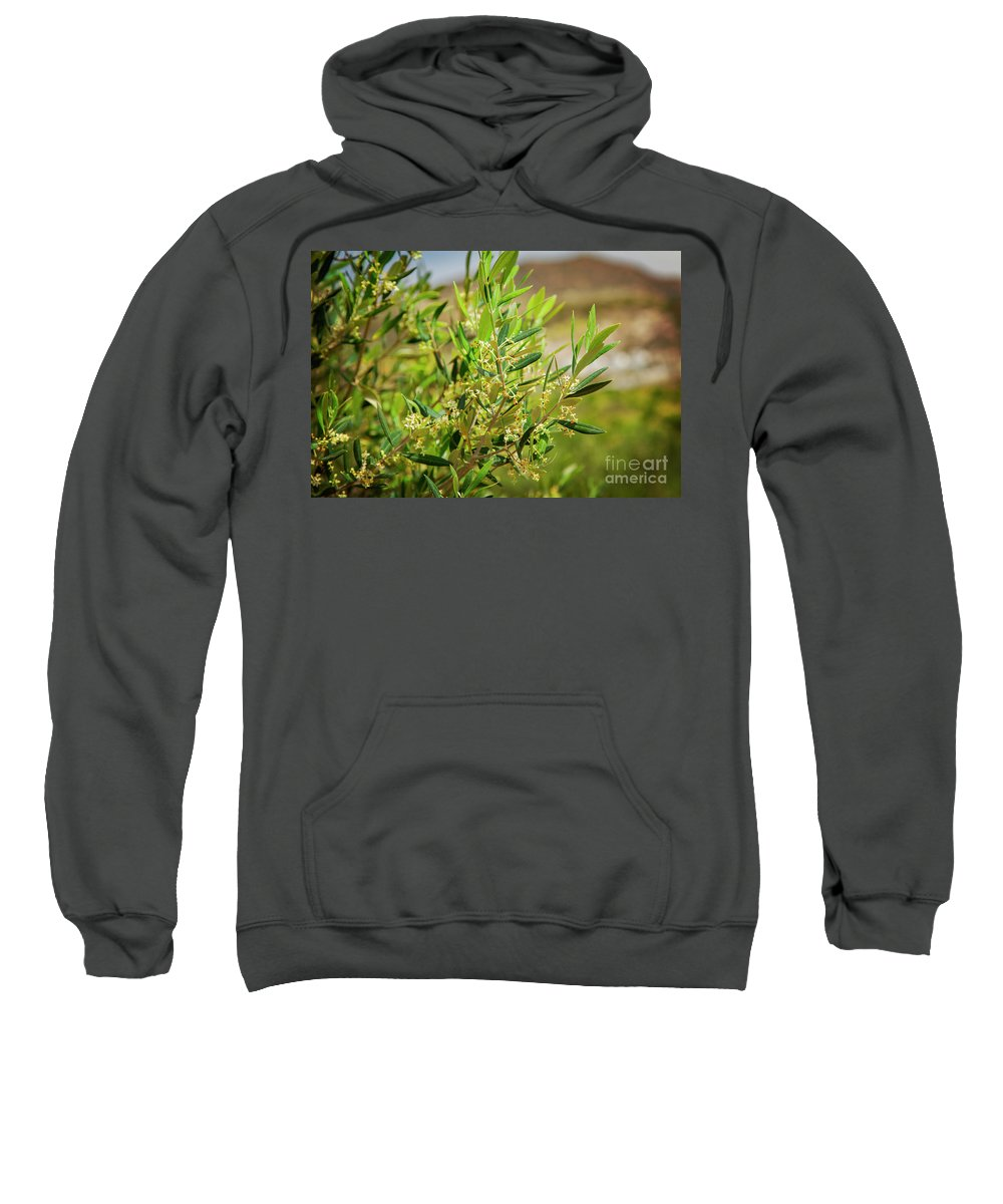 Crete Sweatshirt featuring the photograph An Olive Tree by Sophie McAulay