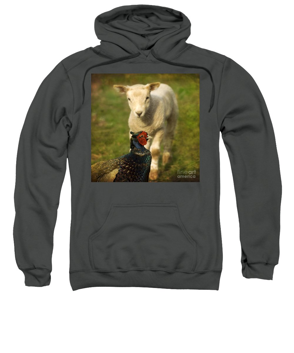 Lamb Sweatshirt featuring the photograph And Who Are You by Angel Ciesniarska