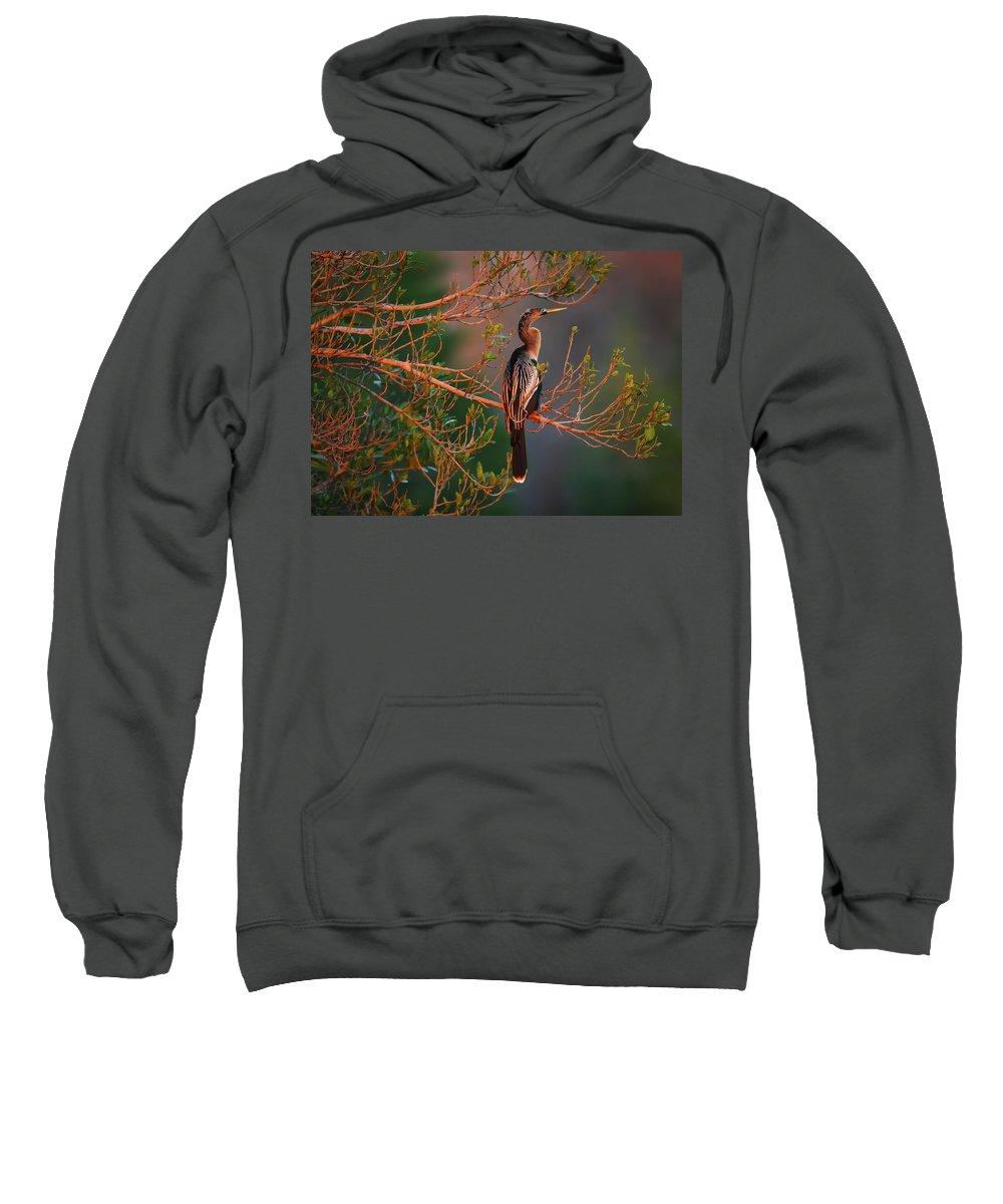 Anhinga Sweatshirt featuring the photograph Anhinga Sunset by Dennis Goodman