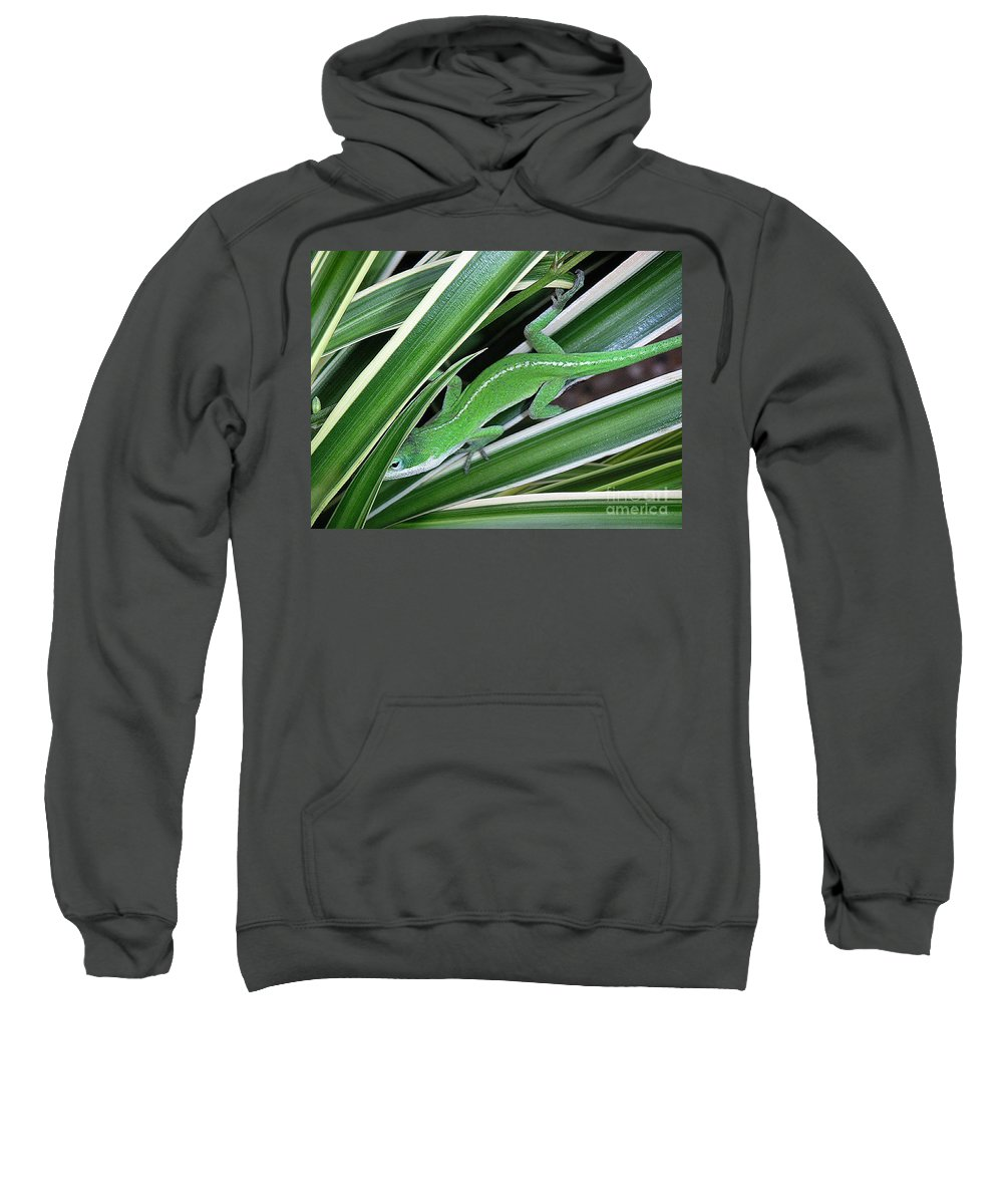 Nature Sweatshirt featuring the photograph Anole Hiding In Spider Plant by Lucyna A M Green