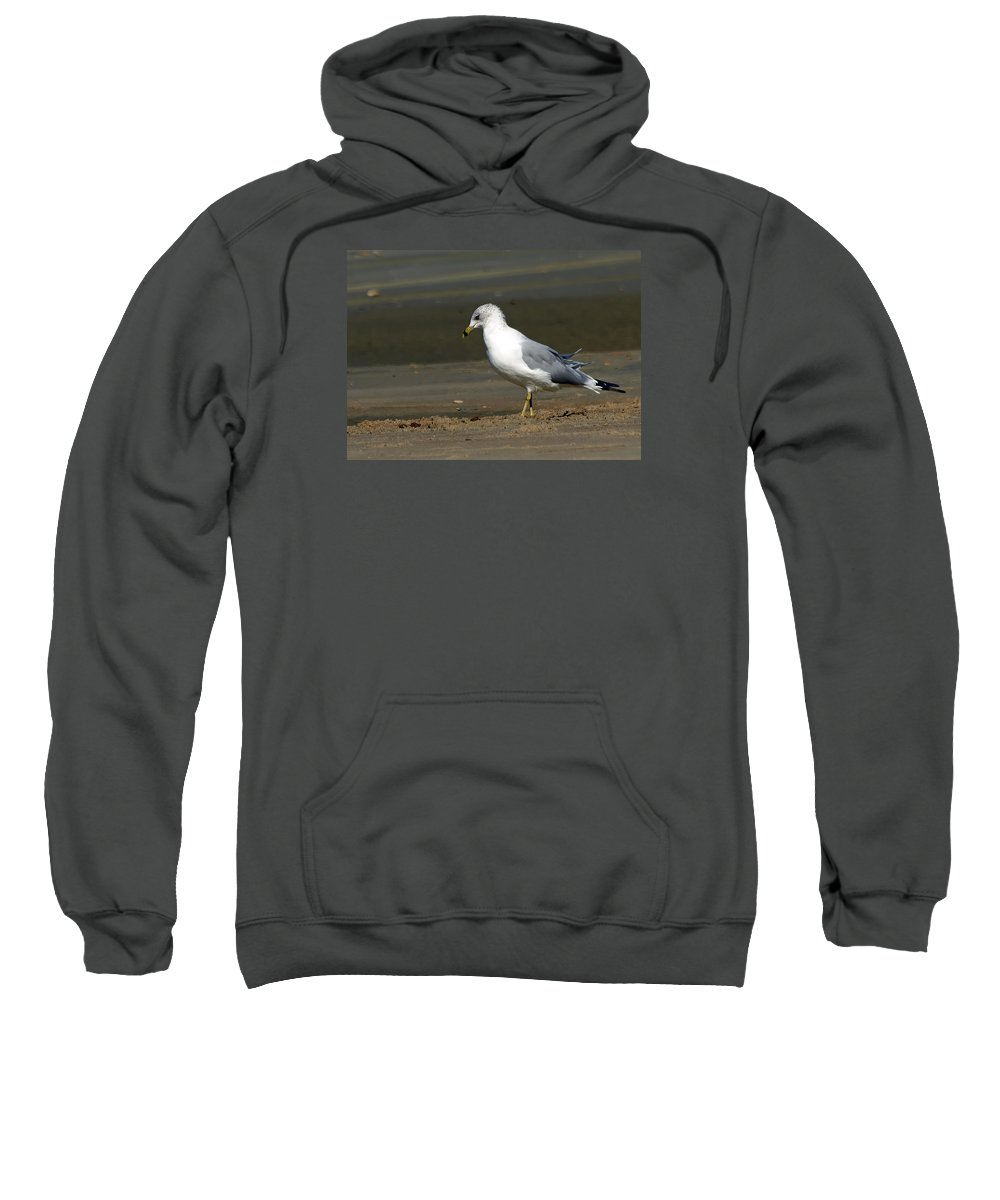 Ann Keisling Sweatshirt featuring the photograph Another Day At The Beach by Ann Keisling